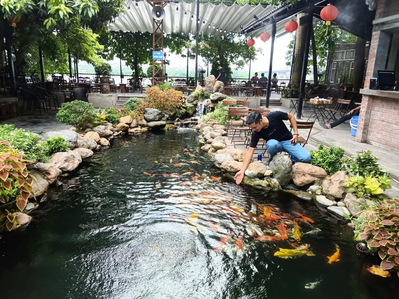 Tận dụng lợi thế của khu vực để thiết kế quán cafe cá koi
